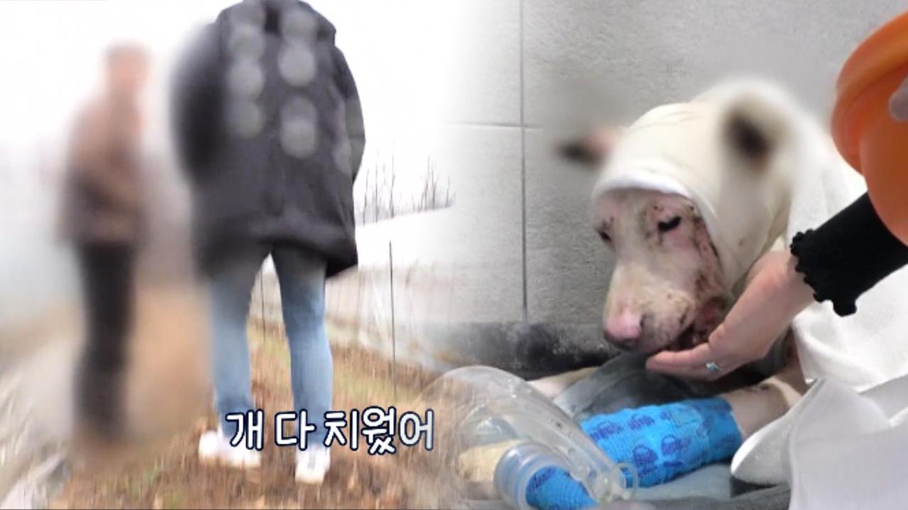 이틀 뒤 다시 찾은 시흥 개 농장... 사라져버린 개들의 행방!