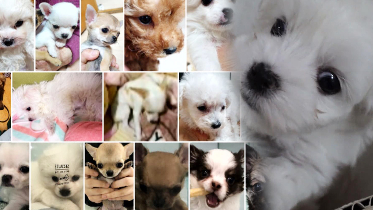 [충격] 버려진 30마리의 강아지... 강아지 연쇄 유기 사건