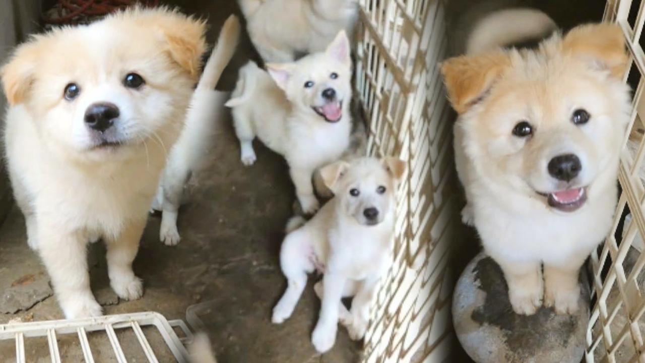 어느 날 기풍 씨에게 찾아온 강아지 6마리 대가족!