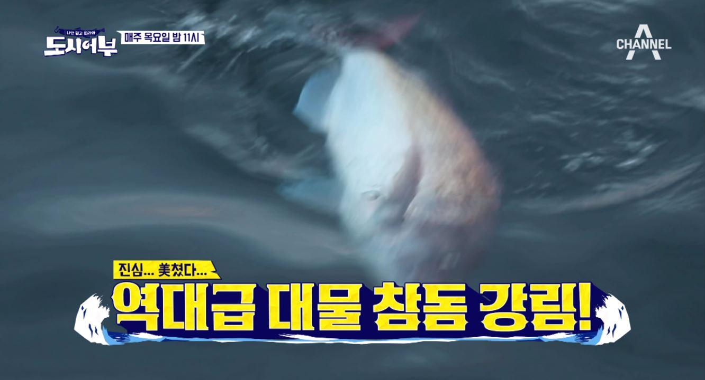 [선공개] 메리 참돔 크리스마스! 킹태곤의 부활, 초대형 입질 강림!